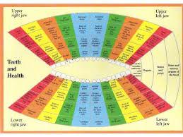 Teeth And Health Chart Acumedic Shop Health Chart
