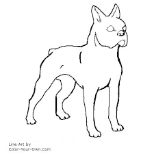 Small Picture Boston Terrier Dog Coloring Page