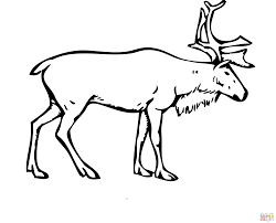 Small Picture Reindeer Deer coloring page Free Printable Coloring Pages