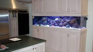 chicago custom aquariums fish tank company 300 gallon saltwater