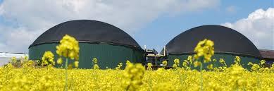 Bildergebnis für biomassekraftwerk