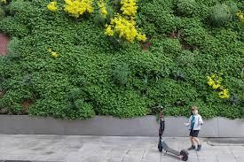 vertical gardens butong