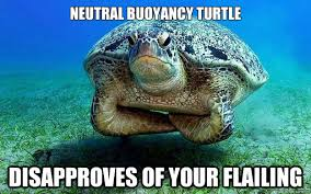 Neutral buoyancy turtle disapproves of your flailing ... via Relatably.com