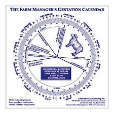 Details About Sheep Gestation Calendar Calculate Birth Breeding