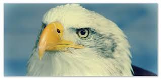 Доклад про орлов Сообщение про орла