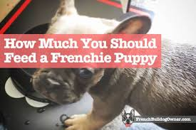 Heavy Sixteen Feeding Chart How Much Should I Feed My French Bulldog Puppy Feeding Guide
