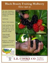 Weeping Mulberry Ornamental Trees  Trees  Pinterest  Gardens Teas Weeping Fruiting Mulberry Tree