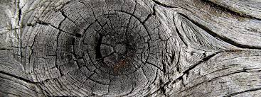 Image result for plank in eye