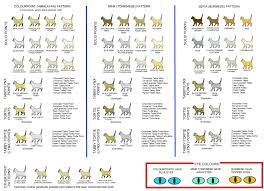 Tonkinese Genetics Color Coat Pattern Eye Color Image 17