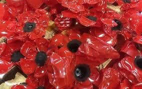 Image result for bottle poppies