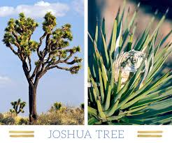 desert plants with names. Wonderful Names Joshuatree With Desert Plants Names S