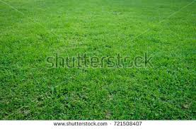summer outdoor backgrounds. Grass Natural Landscape Texture. Summer Outdoor Background Backgrounds
