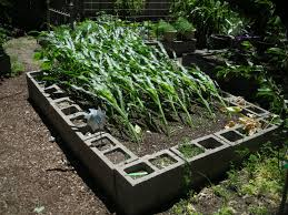 the raised garden is messy unkempt and looks like it was thrown together using concrete blocks a9f64abde2f3153fe73e3e2c3c51ac6e