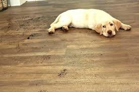 best flooring for pets. Best Flooring For Dogs Medium Size Of Hardwood Dog . Pets