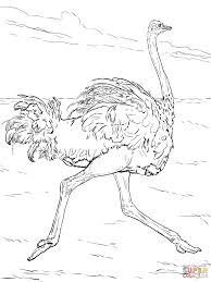 desert animals coloring pages free printable pictures within animal