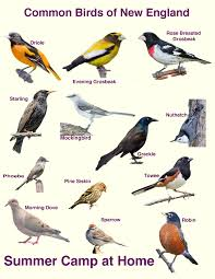 How Many Species Of Birds In Uk A Selection Of Pins About