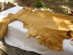 perhaps this is not a problem with modern tanned hides but with brain tan it is
