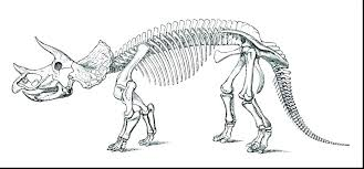Realistic Dinosaur Bones Coloring Pages Skeleton Coloring Pages