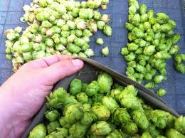 Hop Wheel Chart American Ipas Part 3 Five Hops That Shaped Your Ipa