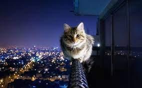 Cat Wallpaper Macbook