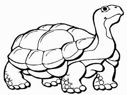 tortoise animal coloring pages