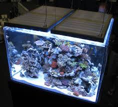 led reef lighting reviews lilianduval