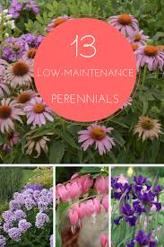 Small Picture 13 Low Maintenance Perennials For Any Garden httpwww