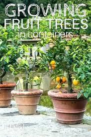 dwarf fruit trees for dwarf fruit trees the best dwarf fruit trees to grow in