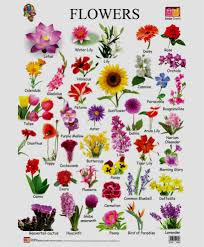 new images of all types of flowers with pictures flower types names and pictures thin
