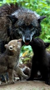 wolf puppies wallpaper. Brilliant Wallpaper 1080x1920 Wallpaper Wolves Family Grass Puppies Throughout Wolf Puppies D