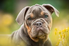 Top 10 Breeds Affected By Hip Dysplasia The Balanced Dog