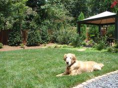 Small Picture 8 Backyard Ideas to Delight Your Dog Garden inspiration
