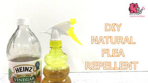 diy flea repellent with apple cider vinegar