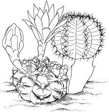 Gymnocalycium Mihanovichii Cactus Kleurplaat Gratis Kleurplaten
