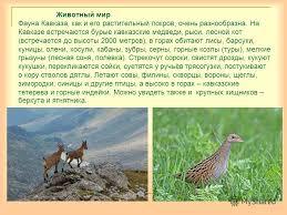 Презентация на тему Кавказ самые высокие горы России Горы  22 Животный
