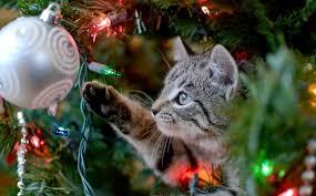 Resultado de imagen de imagenes de arboles de navidad con perros