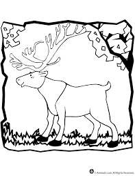 Small Picture Caribou Coloring Page Woo Jr Kids Activities