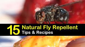 keeping flies away 15 natural fly