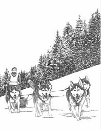 Pin By Avon Lady Calling With Dawn Owens On Iditarod In 2019 Dogs