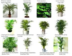 house plants names and pictures green plants names unique indoor green plants names names of houseplants