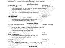 Cover Letter Template Nz Costumepartyrun