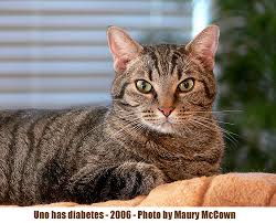 Feline Insulin Dosage Chart Cat Diabetes Treatment Poc