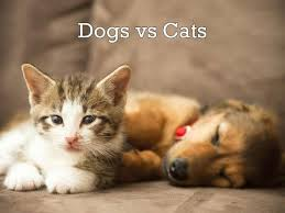 dogs vs cats compare and contrast essay this essay aims to present similar and opposite sides of cats and dogs keeping feeding and caring it will compare and contrast all aspects of these