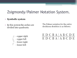 Palmer Notation Charting Tooth Numbering System