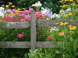 best garden plants. List Of The Best Perennial Flowers Garden Plants E