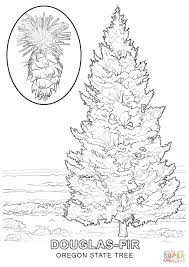 Small Picture Oregon State Tree coloring page Free Printable Coloring Pages