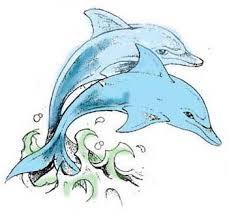 Ryby Delfíni A Mořští Koníci Dovol Sám Sobě Svobodně žít