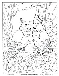 Bird Coloring Pages Free Birds Book One Coloring Pages Animal