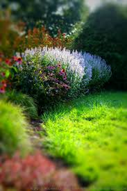 Small Picture Cutting Edge Garden Maintenance Sharply Defining Beds Borders