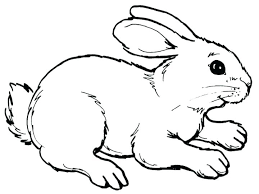 Cute Bunny Coloring Pages Printable Print Out Rabbit Easter